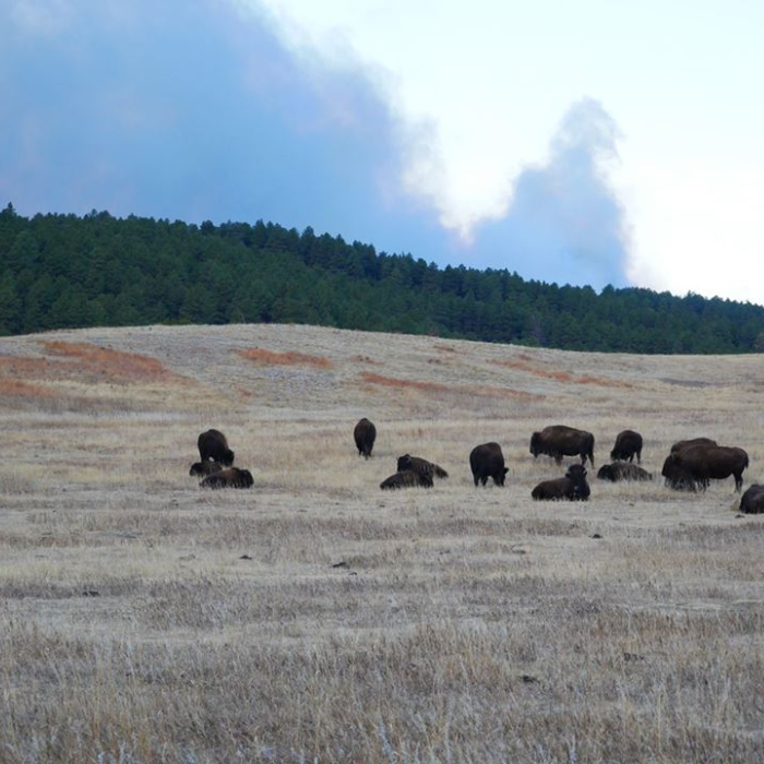 Custer State Park Encourages Hay Donations for Those Affected By Fire